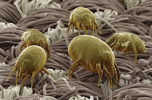 vendere di più con la paura: immagine di batteri della polvere